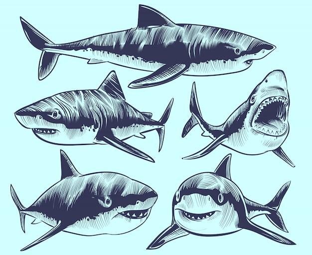Эскиз акулы. плавающие акулы с открытым ртом. подводная коллекция татуировок животных Premium векторы