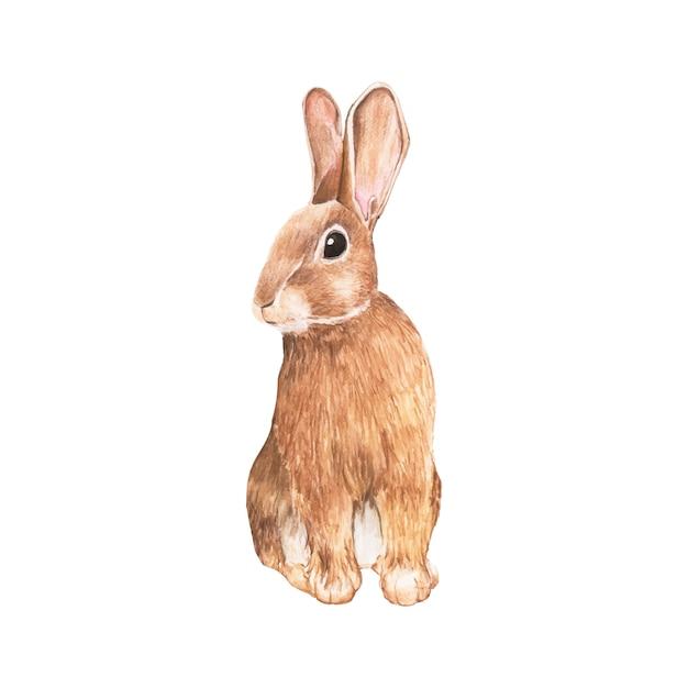 Ручной обращается кролик, изолированных на белом фоне Бесплатные векторы