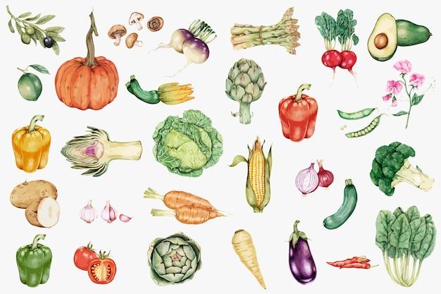 手描き野菜コレクションベクトル 無料ベクター