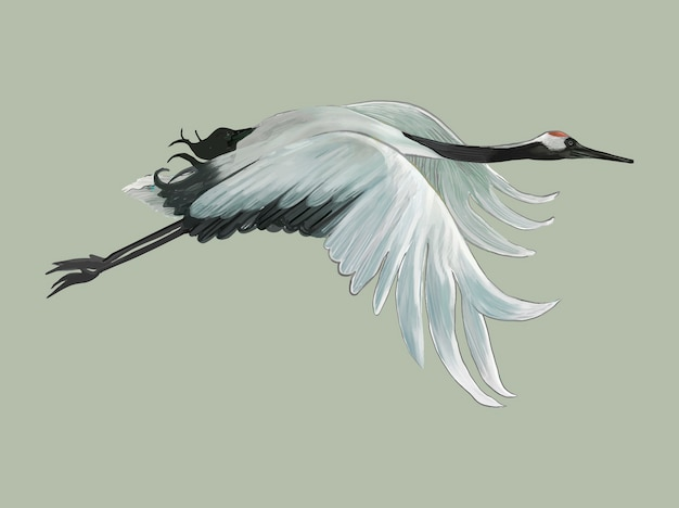Летающий элегантный белый японский кран Бесплатные векторы