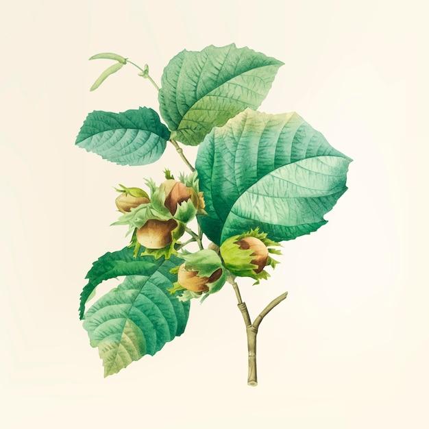 Иллюстрация старинных цветов Бесплатные векторы
