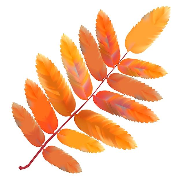 условиях листья рябины в картинках женщинам даже