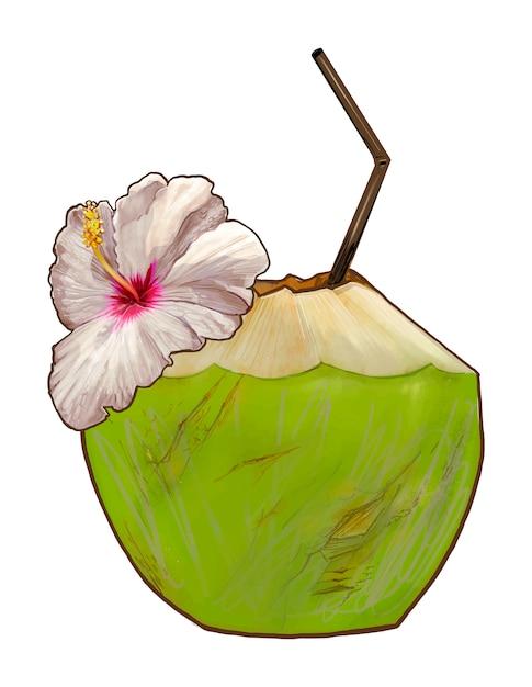 トロピカル新鮮な若いココナッツイラスト 無料ベクター
