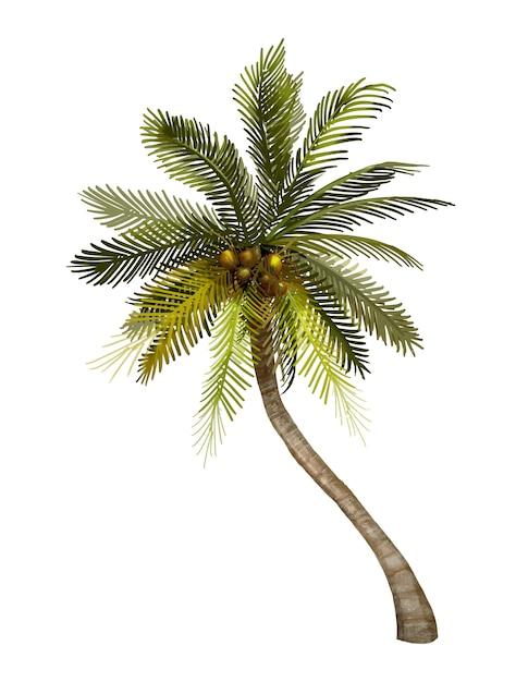 Иллюстрация тропической кокосовой пальмы Бесплатные векторы