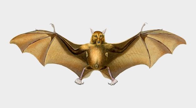 Летучая мышь Бесплатные векторы