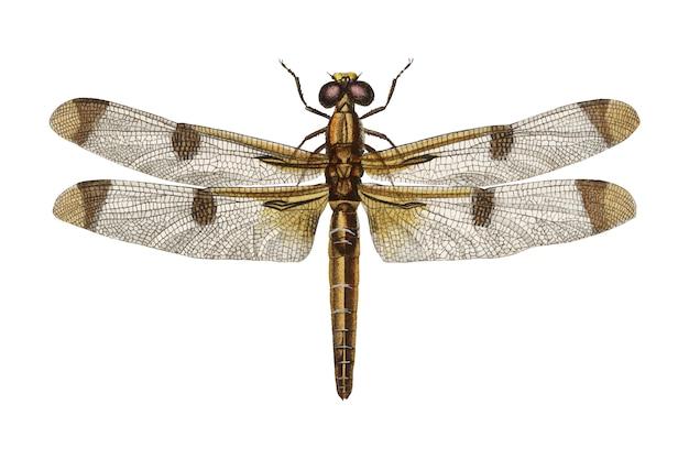 昆虫 無料ベクター