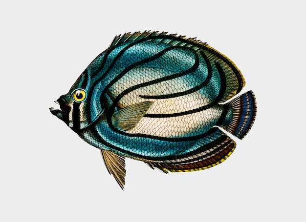 魚 無料ベクター