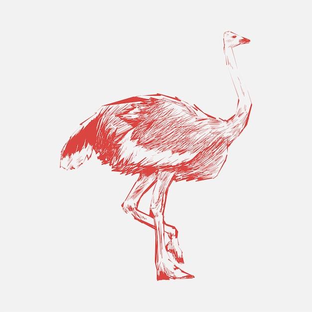 Картинки страуса нарисованные, днем