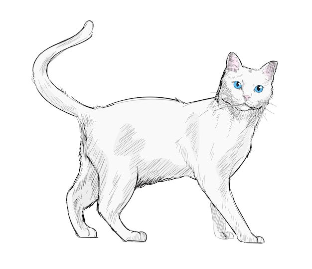 Рисунки породистых кошек карандашом