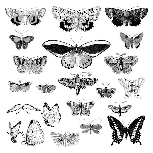 様々な昆虫のイラストセット ベクター画像 無料ダウンロード