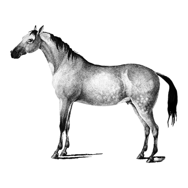 馬のヴィンテージイラスト 無料ベクター