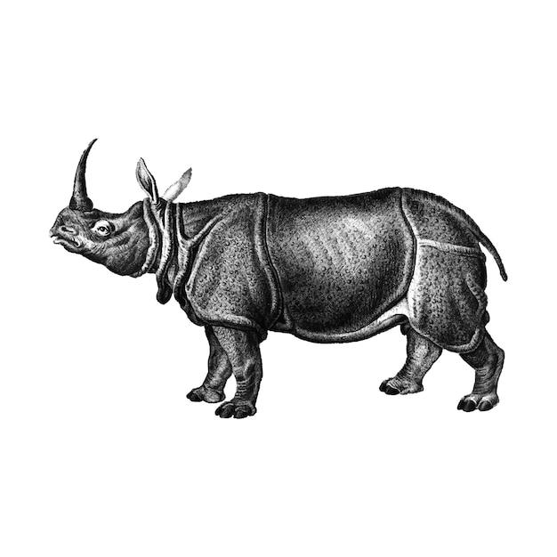 インドのサイのビンテージイラスト ベクター画像 無料ダウンロード