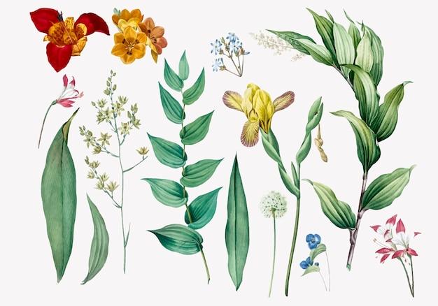 花と植物のイラストのセット 無料ベクター