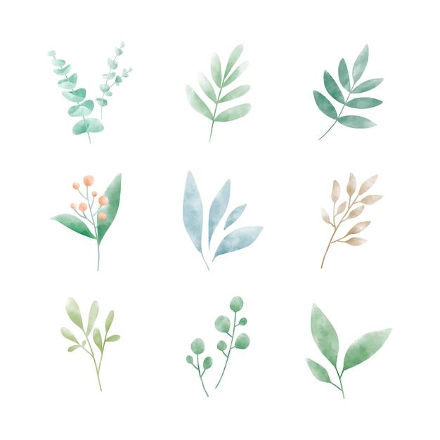 水彩葉ベクトルのセット 無料ベクター