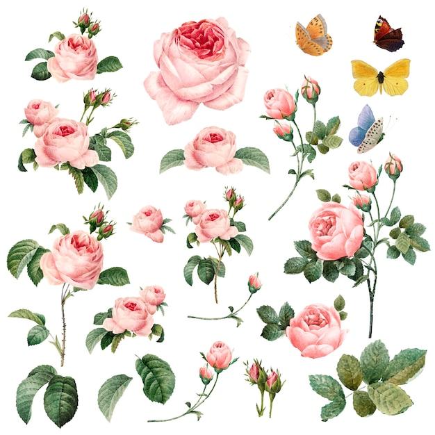 手描きのピンクのバラのコレクション 無料ベクター