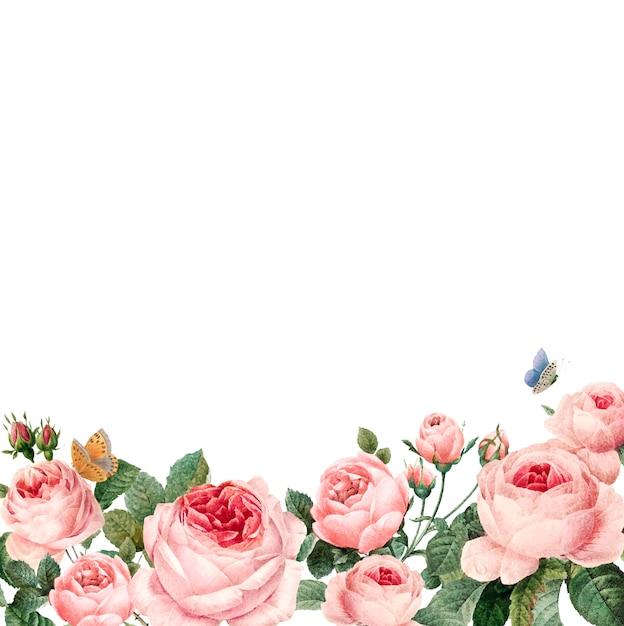 白い背景に手描きのピンクのバラのフレーム 無料ベクター