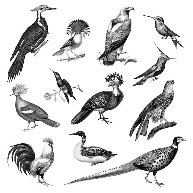鳥のビンテージイラスト 無料ベクター