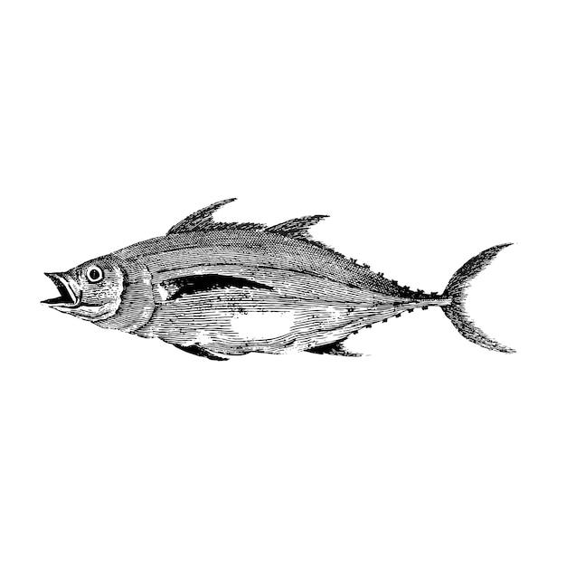 魚のヴィンテージイラスト 無料ベクター