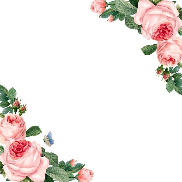 Ручной обращается розовые розы кадр на белом фоне вектор Бесплатные векторы