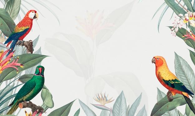 コンゴウインコ熱帯モックアップイラストレーション 無料ベクター