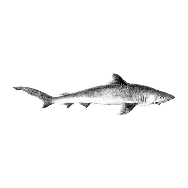 サメのヴィンテージのイラスト 無料ベクター