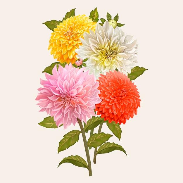 混合ダリアの花 無料ベクター