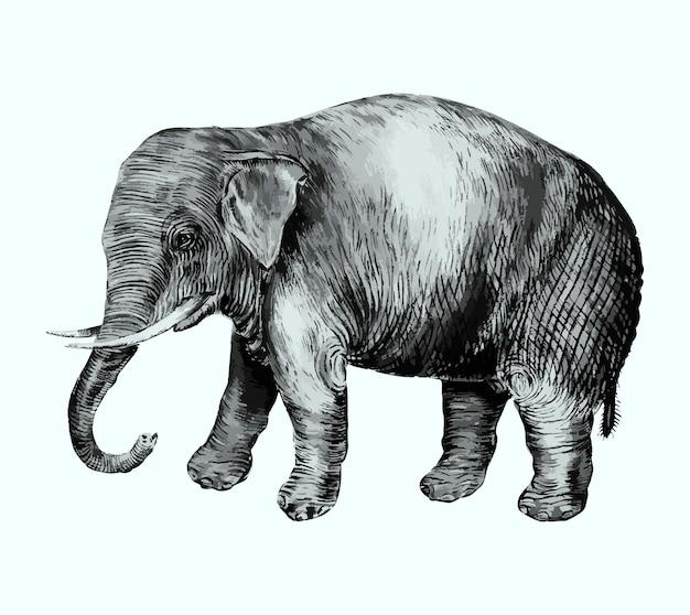 ビンテージスタイルの象 無料ベクター