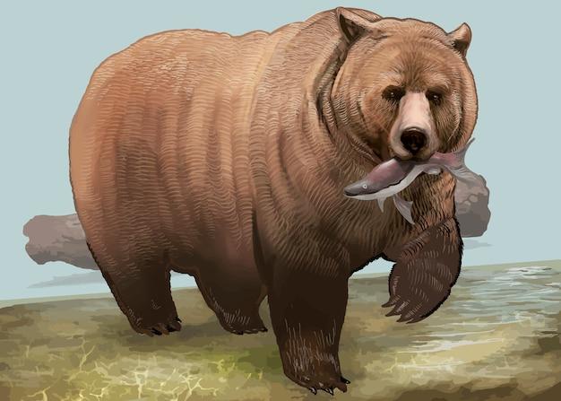 手描きのクマ 無料ベクター