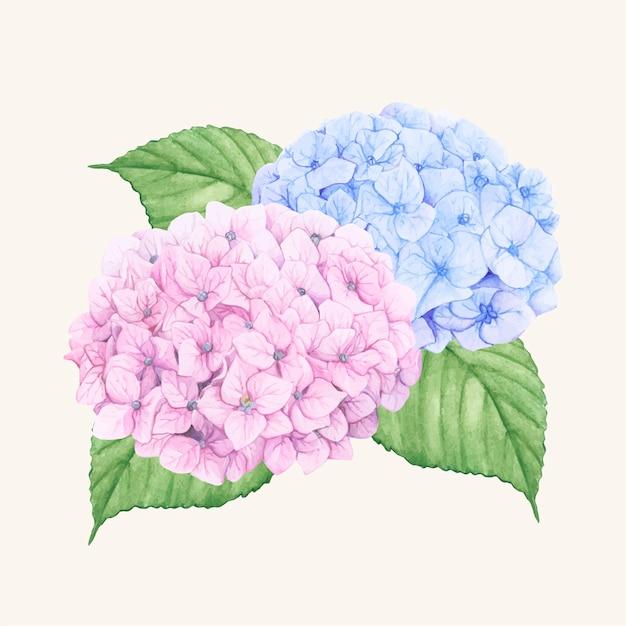 手描きのアジサイの花が孤立した 無料ベクター