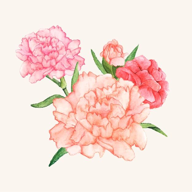 手描きのカーネーション花は孤立した 無料ベクター