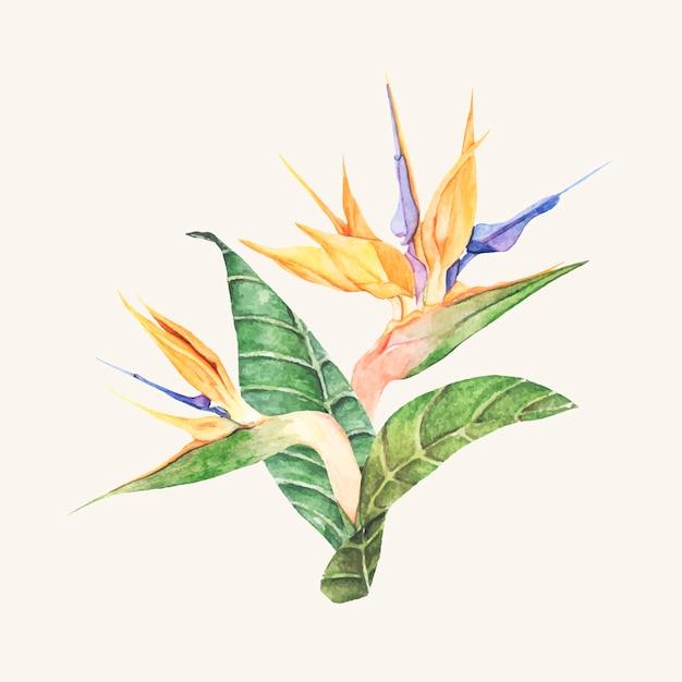 手を引く鳥のパラダイス花を孤立させた 無料ベクター