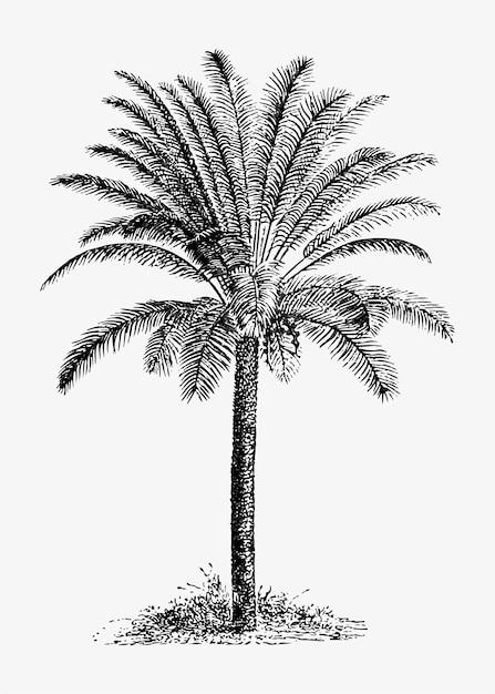 熱帯のヤシの木 無料ベクター