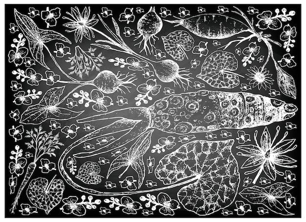ルートとトウガラシの野菜の手を黒板に描いた Premiumベクター