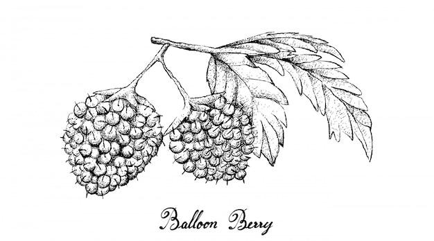 白い背景の上のバルーン果実の手描き Premiumベクター