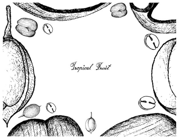 ダブルココナッツとマコンシロ果実の手描きのフレーム Premiumベクター