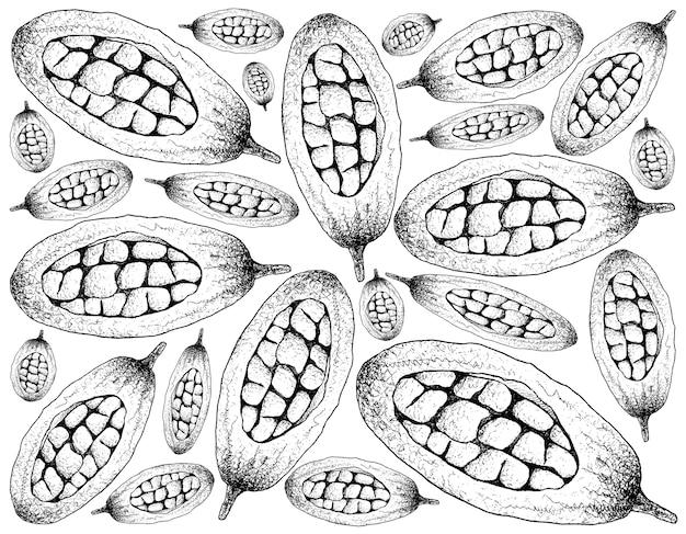バオバブまたはアマンソニア果実の手描きの背景 Premiumベクター