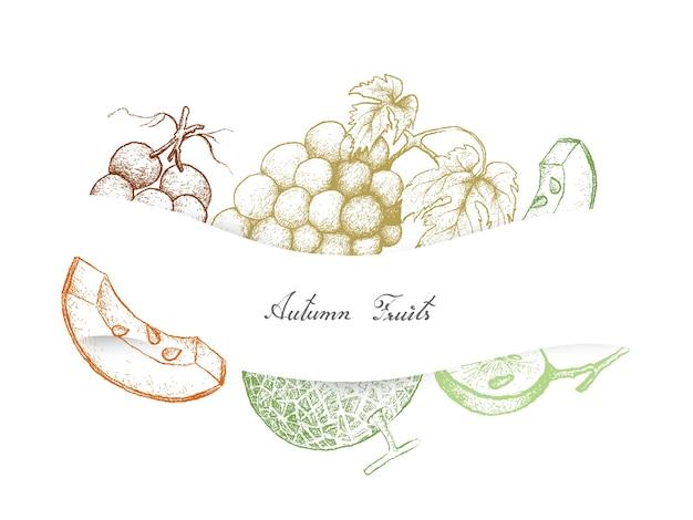 秋の果物、メロン、ブドウの手描き Premiumベクター
