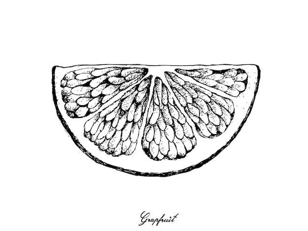 Ручной обращается из грейпфрутовых фруктов Premium векторы