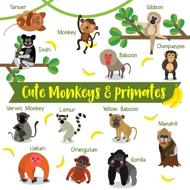 動物の名前と猿と霊長類の漫画 Premiumベクター