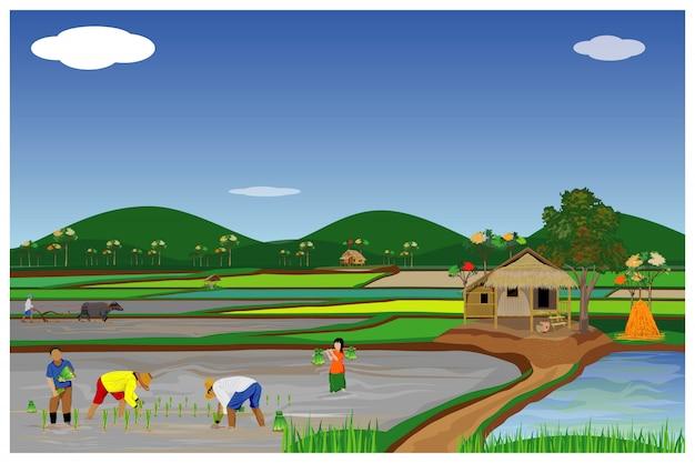 Фермер пересадки риса посева в рисовом поле дизайн вектор Premium векторы