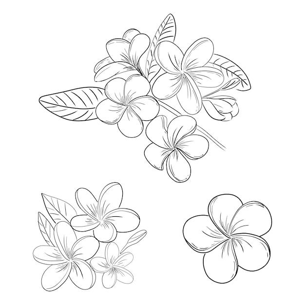Плюмерия или жасмин цветок иллюстрации набор для рисования Premium векторы