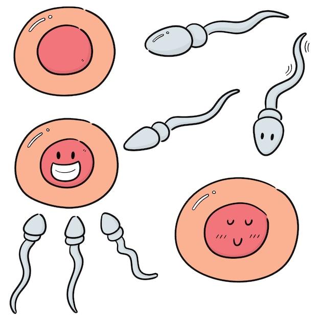 Векторный набор спермы и яйцеклетки Premium векторы