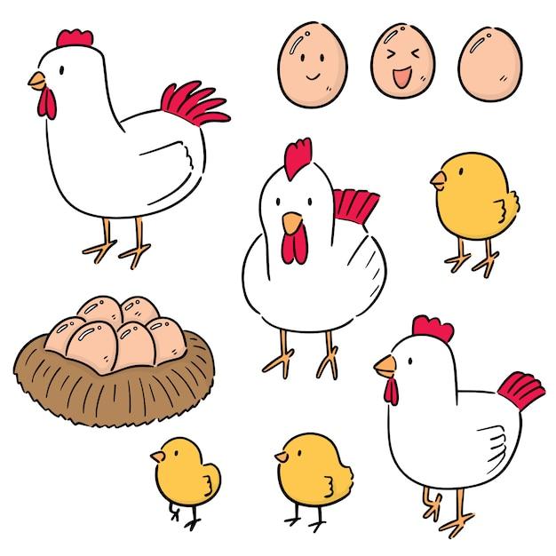 Набор из курицы и яйца Premium векторы