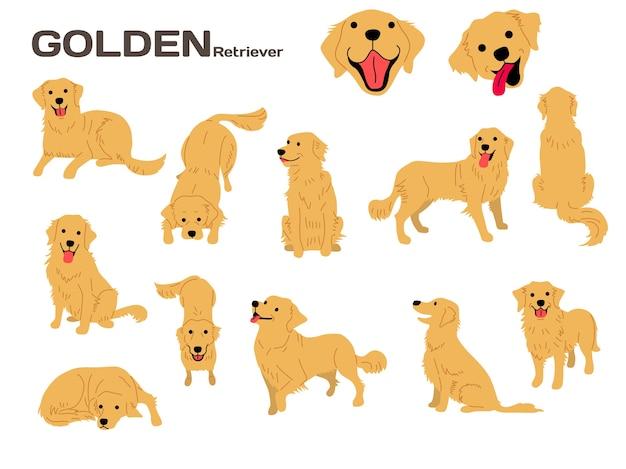 ゴールデンレトリーバーのイラスト犬のポーズ犬の品種 ベクター画像