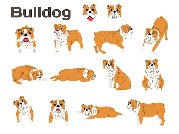 ブルドッグ、行動中の犬、幸せな犬 Premiumベクター