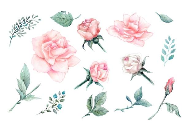 Акварель розовых роз винтаж векторный дизайн набора. Premium векторы