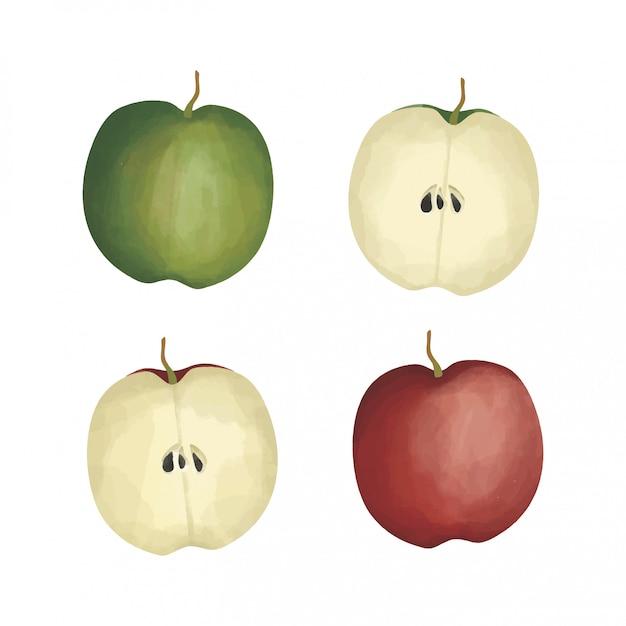 赤と緑のリンゴの水彩風 Premiumベクター