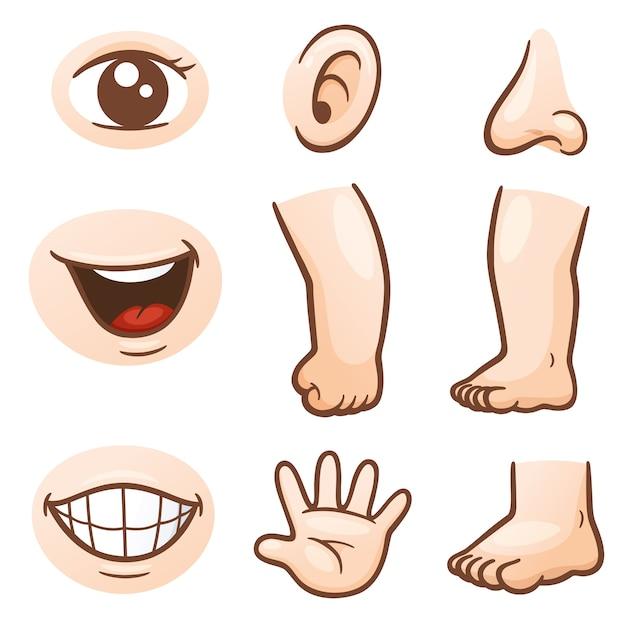 Картинки части тела по отдельности