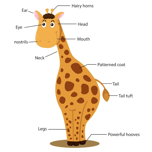 Картинка тело животного