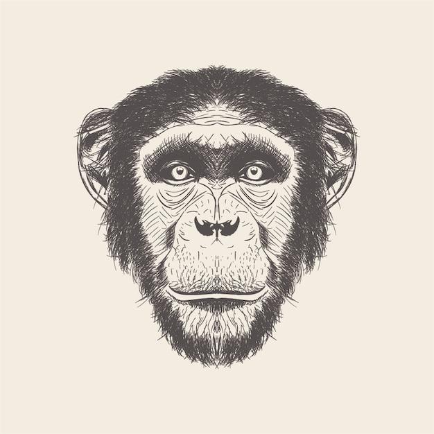手猿イラストの描かれたベクトル。 Premiumベクター